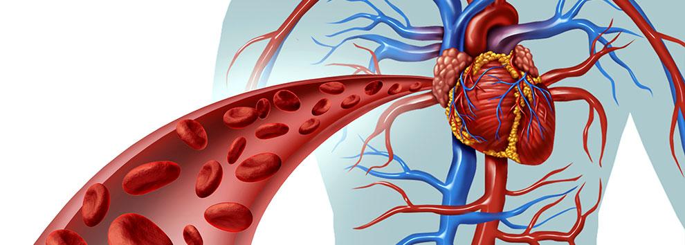 agendamento cardiologia Cardiologista em Fortaleza e Maracanaú   ICCardio cirurgia vascular